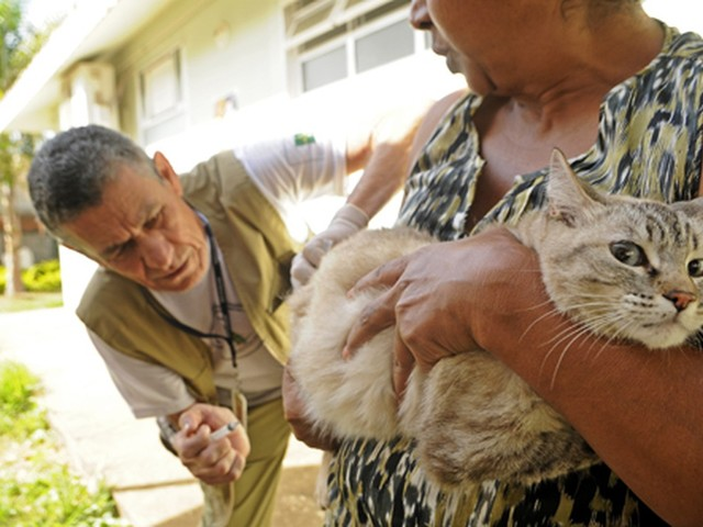 Campanha de vacinação contra raiva animal começa neste sábado no DF