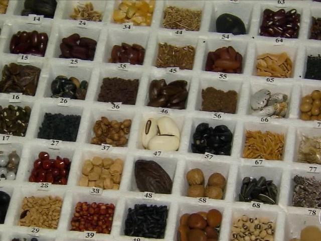 Embrapa envia milhares de sementes para 'bunker' localizado na Noruega