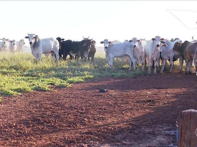Furto de gado no interior de São Paulo preocupa criadores