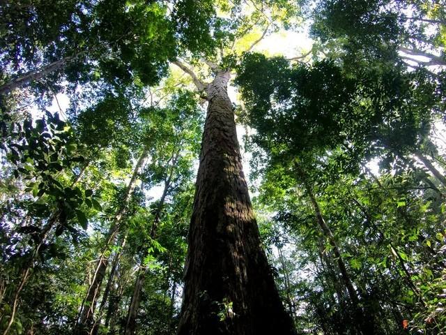 Mudanças climáticas podem levar a maiores incêndios na Amazônia e tornar floresta emissora de gases do efeito estufa, diz pesquisa