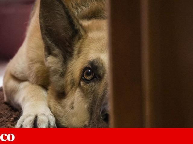 Inquéritos-crime por abandono e maus tratos a animais subiram 20,6% em 2018