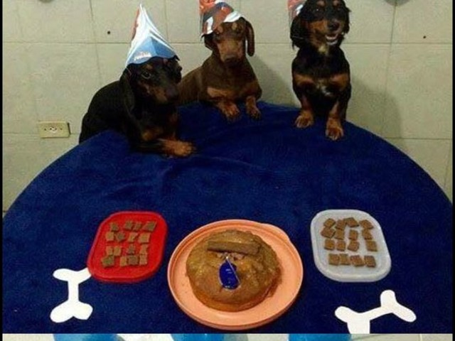 A melhor festa de aniversário de cachorro que você já viu