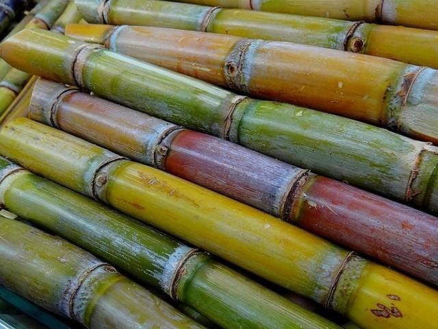 Fábrica do Ribeiro Sêco espera adquirir 1000 toneladas de cana-de-açúcar