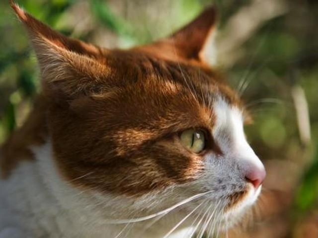 Pérdida de gusto, artrosis, enfermedades renales... ¿Cómo y cuándo manifiestan los gatos los primeros signos de vejez?