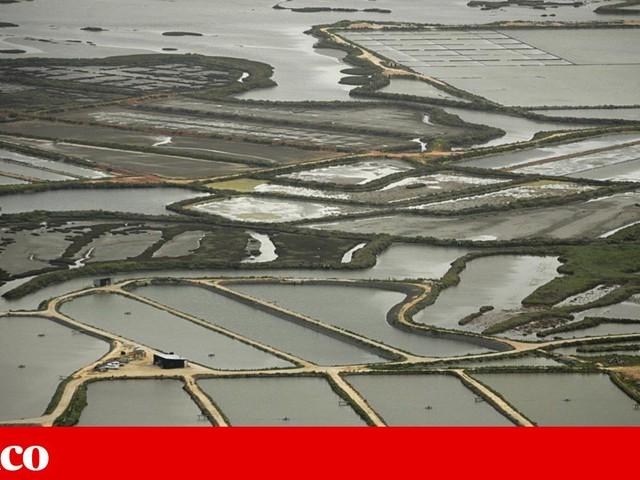 Vale do Sado quer água do Alqueva para arroz e outras culturas