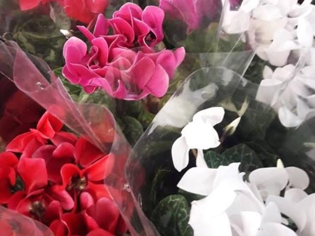 Shopping de Salvador recebe Feira de Flores com preços a partir de R$ 4,50