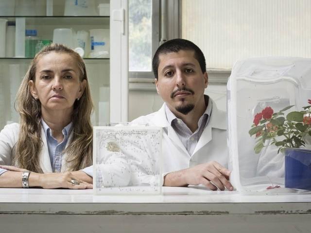 Ciência em risco: as perspectivas de 20 pesquisadores brasileiros para 2019
