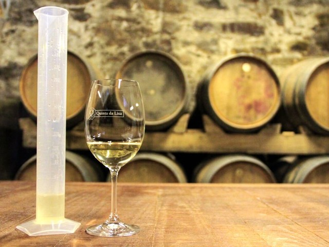 Enólogo por 1 dia: como é a experiência de fazer um vinho verde