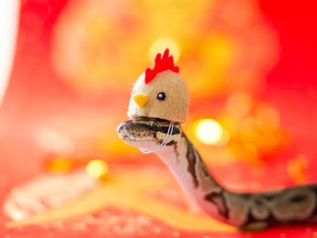 44 Fotografias de cobras fofinhas pra você superar seu medo