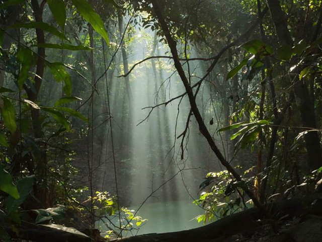 Após quase virar autódromo | Floresta do Camboatá pode se transformar em Unidade de Conservação