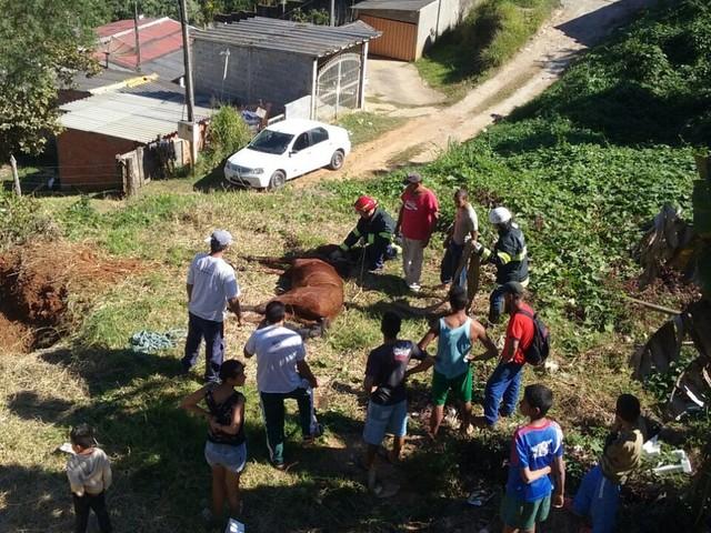 Cavalo é resgatado por bombeiros após ficar preso em fossa de Mairinque