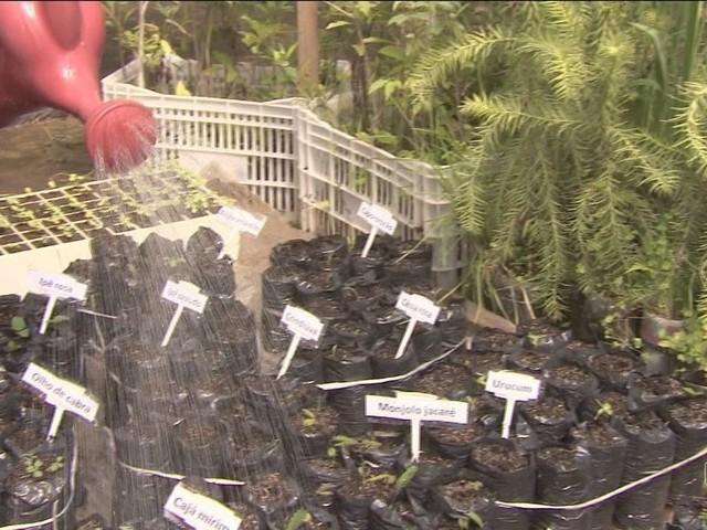 Sementes de floresta anunciada na abertura da Rio 2016 começam a ser plantadas em Chapecó