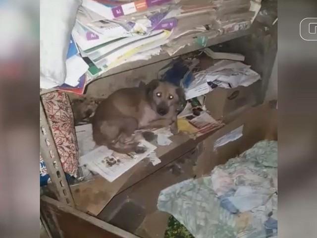 Vizinhos encontram 25 cães em estado crítico após mulher morrer em SP; vídeo
