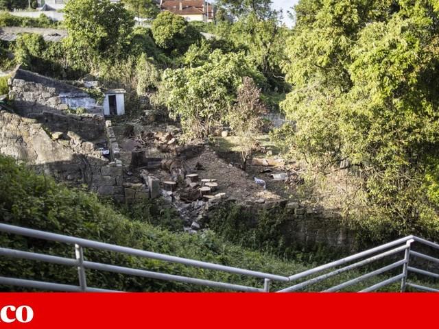 """Limpeza de terrenos em tempo de nidificação das aves: um """"crime ambiental"""" permitido por lei"""
