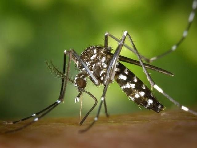 Com mais de 5 mil casos de dengue, AC fica sem inseticida para combate ao mosquito