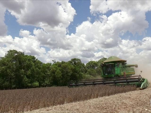 Falta de chuvas e calor antecipam colheita de soja no PR