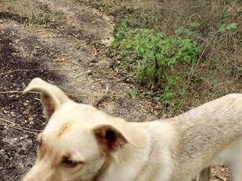 Crueldade! Homem queima cachorro vivo no distrito de Jordão; vídeo