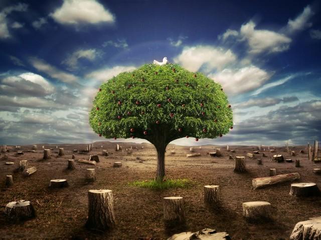 A Árvore da Vida: Conheça a Árvore que pode acabar com a fome do mundo
