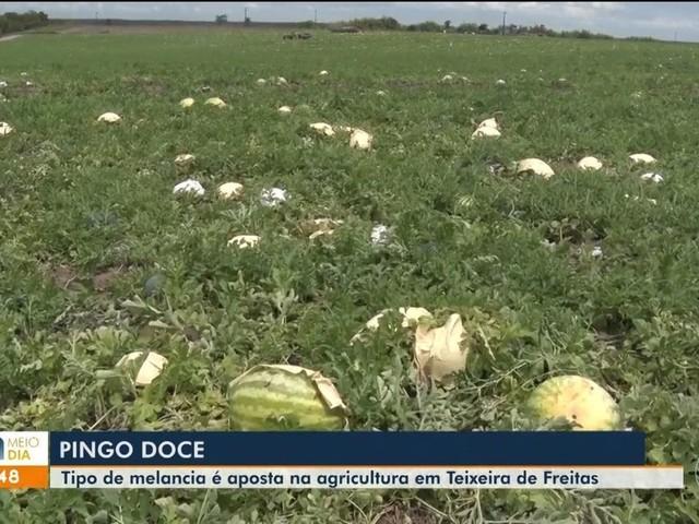 Melancia com sementes comestíveis e casca escura se destaca no mercado da Bahia