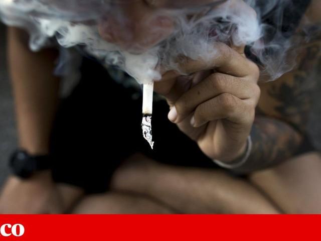 Toxicidade da <i>cannabis</i> está a aumentar. É melhor legalizá-la?