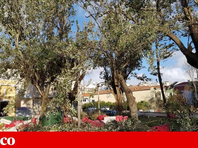 """Movimento diz que passou um """"Leslie camarário"""" pelas árvores de Buarcos"""