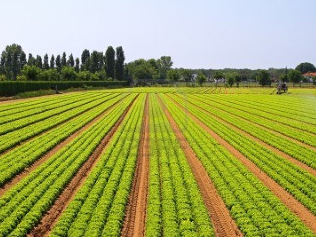 Santana com novo caminho agrícola que vai beneficiar 20 explorações