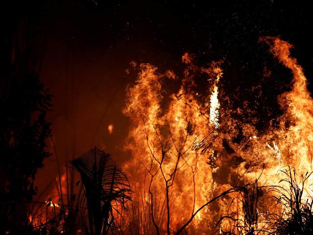 JBS quer R$ 1 bilhão em fundo para a Amazônia