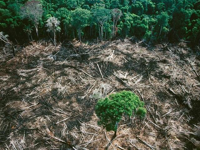 Bombeiros do DF estão à disposição do Planalto para atuar na Amazônia