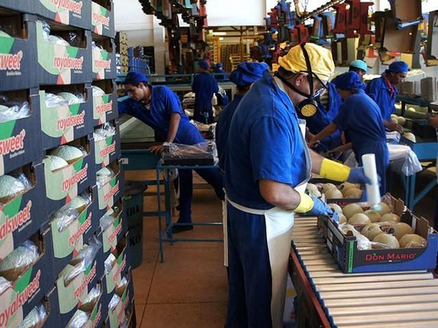 China autoriza importação de melão brasileiro após visita ao RN, diz Ministério da Agricultura