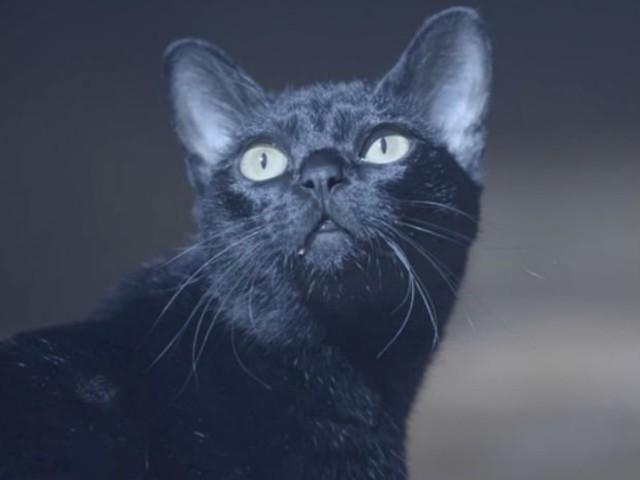 'O Sétimo Guardião': entenda o mistério do gato León