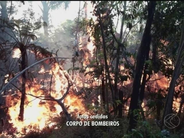 Bombeiros ainda combatem focos de incêndio na Reserva Ecológica do Panga em Uberlândia