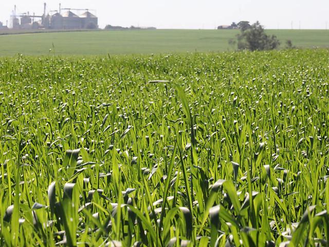 Política de incentivo a biocombustíveis pode elevar preços, dizem analistas