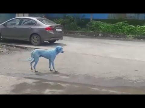 Há cães azuis em Bombaim — e a culpa é da poluição