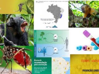 Hipóteses para alta da febre amarela : tráfico de animais ou viagens de pessoas infectadas