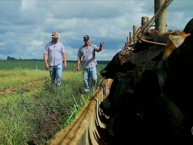Na contramão do país, Centro-Oeste gera empregos no campo