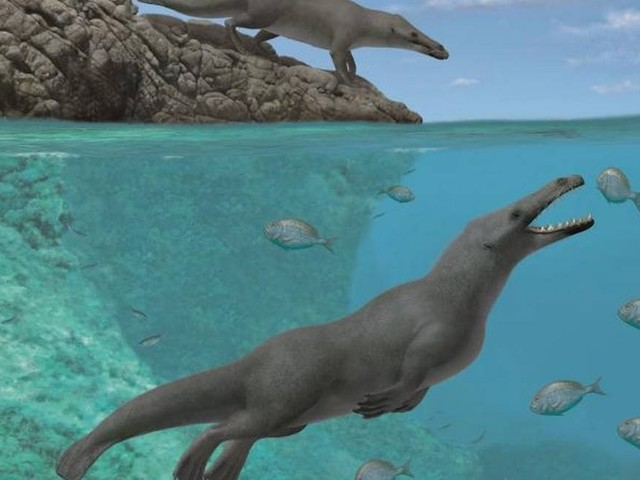 Baleia de quatro patas descoberta no Peru nadava no mar e andava em terra