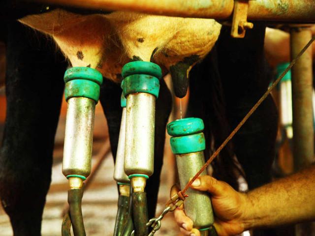 Projeto de lei quer proibir o uso da palavra leite em produtos vegetais