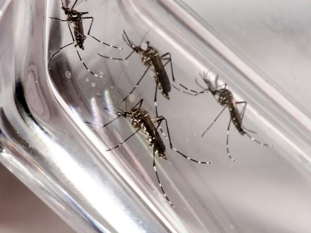 Dengue: com alta de 42% em uma semana, Mogi Guaçu registra 224 casos da doença