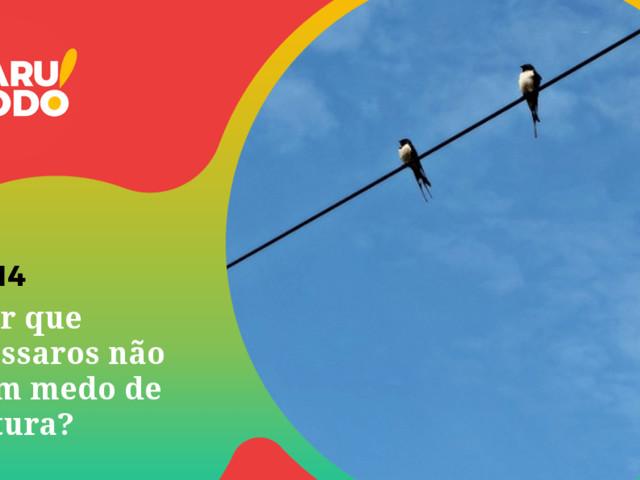 Naruhodo #114 – Por que pássaros não têm medo de altura?