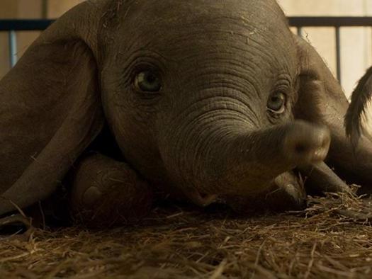 Dumbo | Primeiras impressões