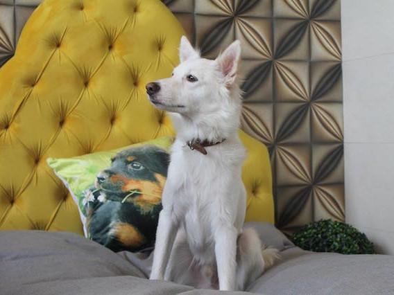 Hotel de luxo para cachorro é inaugurado na Índia