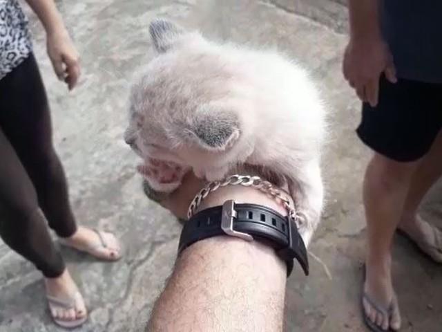 Corpo de Bombeiros resgata filhote de gato que ficou preso em cano de PVC em Sumaré