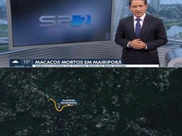 Febre Amarela - Grande São Paulo : 90 animais foram encontrados mortos
