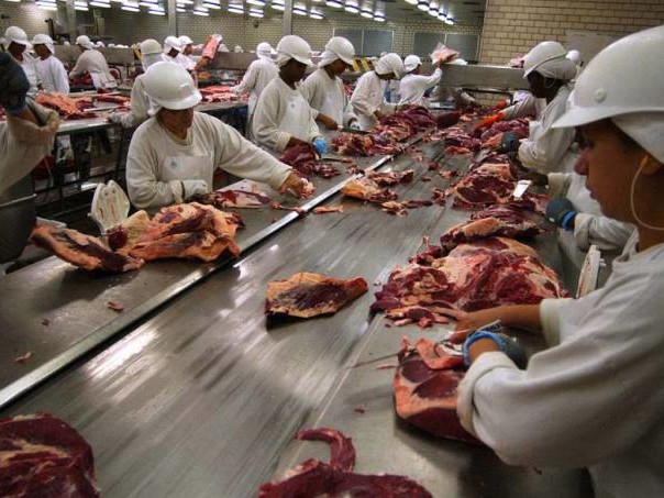 Proibições de exportação não prejudicam ganhos dos produtores de carne suína