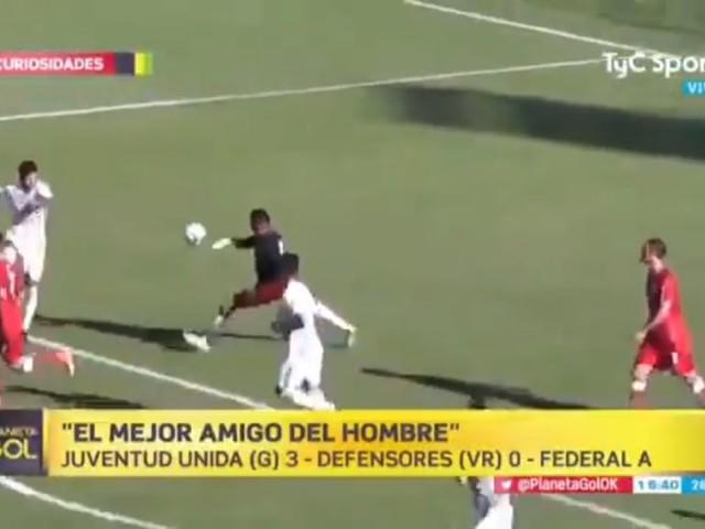 Cachorro invade campo e evita gol em jogo da terceira divisão argentina