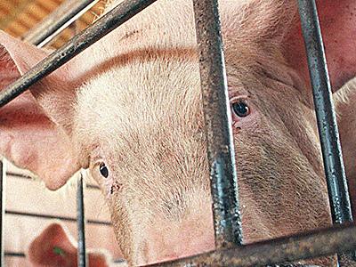 Consumo global de carne suína volta a crescer e garante mercado para Brasil