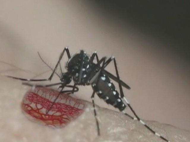 Com aumento de mais de 500% de casos de dengue, Limeira tem mega mutirão contra mosquito