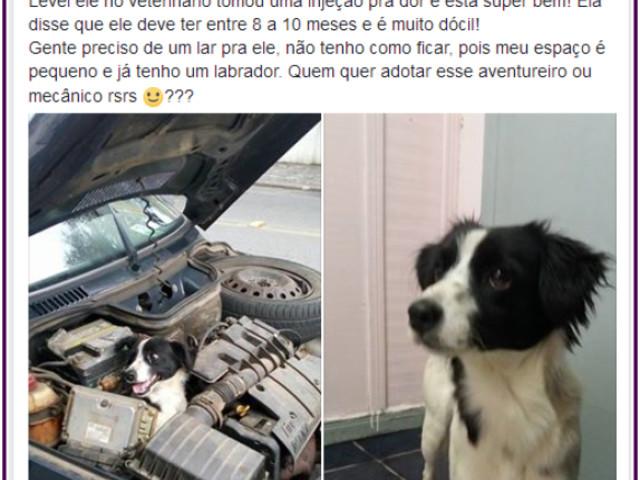 O cachorro mecânico