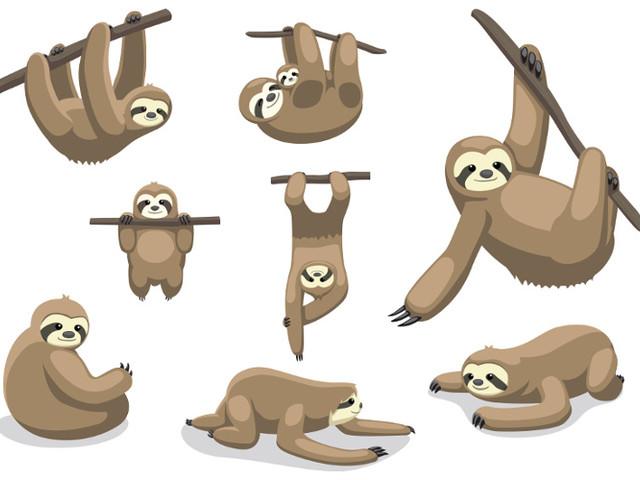 Bicho-preguiça | Saiba tudo sobre esse mamífero!