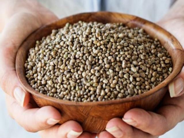 Dieta das sementes: conheça os benefícios dos grãos para saúde
